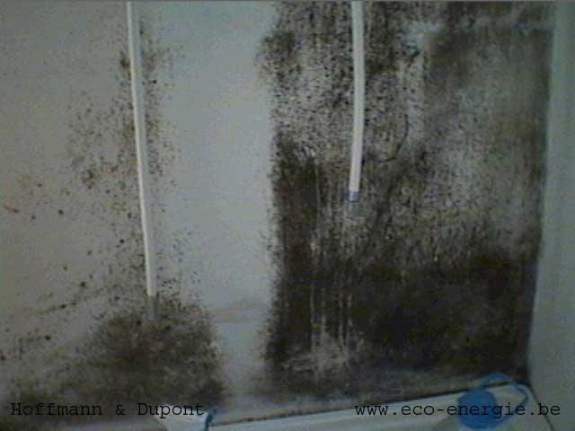 D tection de l 39 origine d 39 humidit dans le b timent expertises - Moisissure noire douche ...